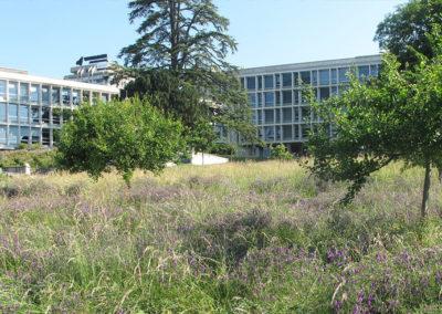 Campus des Cèdres – Lausanne